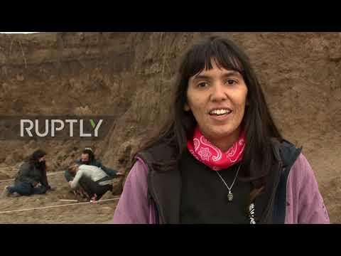 En video-Argentina: Un raro fósil de mamífero extinto fue encontrado por niños en una playa