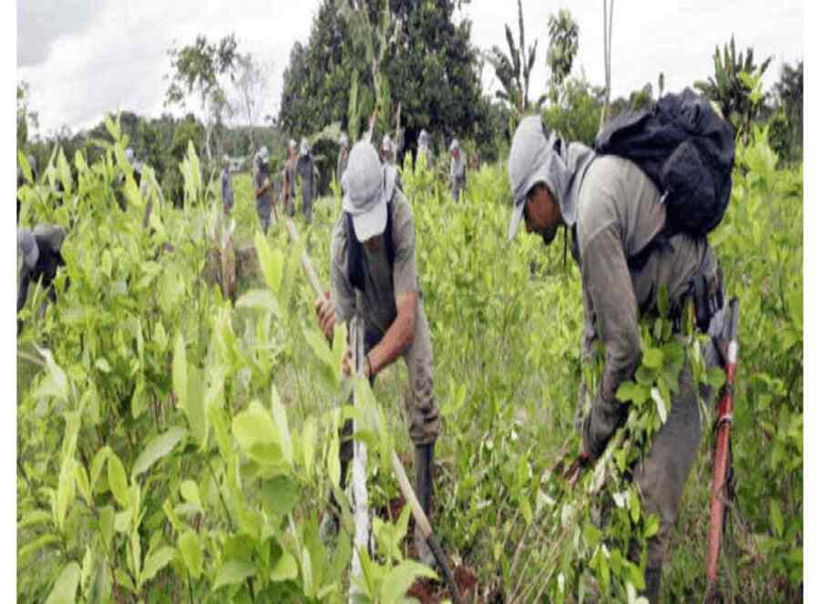 Informe de ONU ratifica a Colombia como primer país productor de cocaína en el mundo